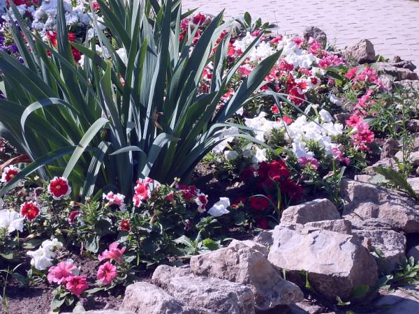 Цветы 23