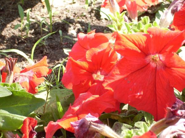 Цветы 28