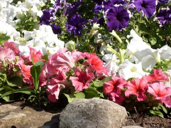 Цветы 210