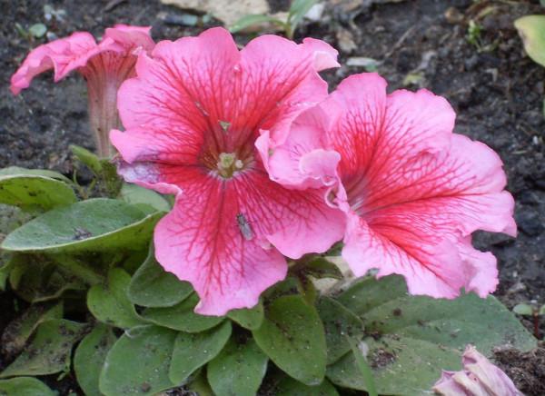 Цветы 211