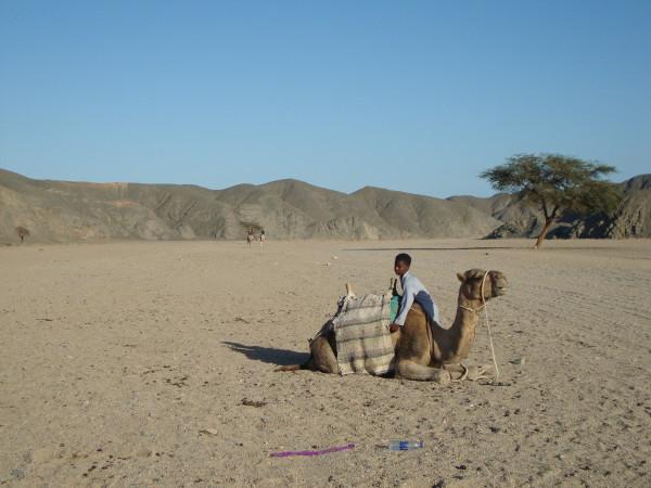 Мальчик - погонщик верблюдов