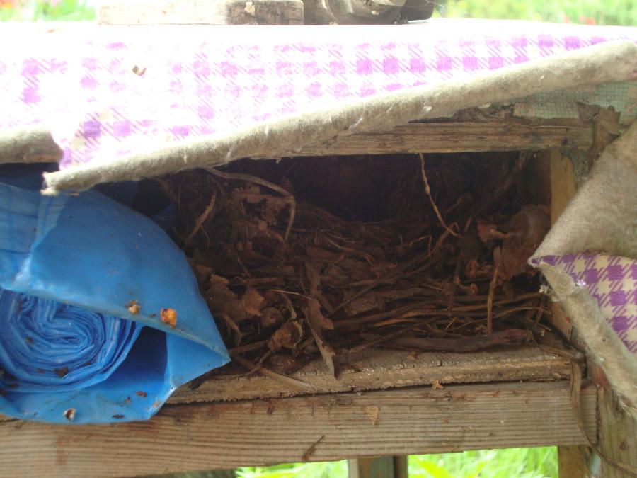 Гнездо в тумбочке