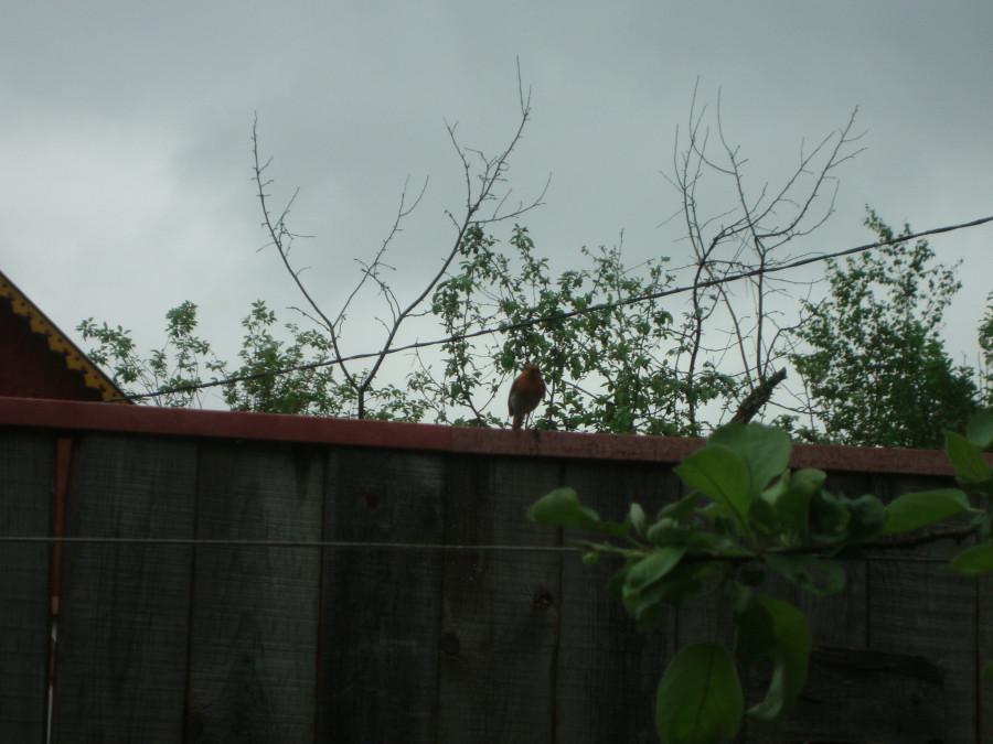 Птичка, свившая гнездо в тумбочке