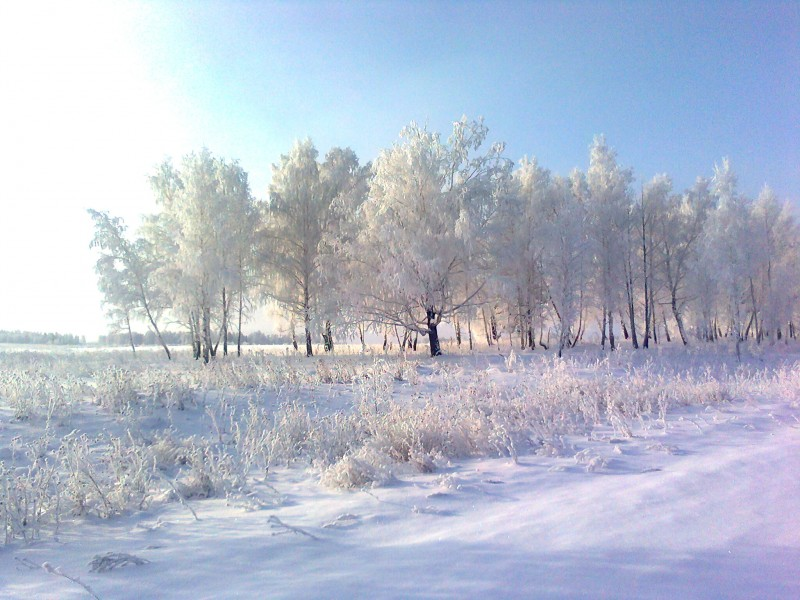 декабрь 2011 г. По пути на охоту мужу понравилась картинка