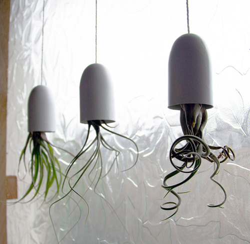 http-_www.designsponge.com_2012_06_diy-project-hanging-air-plant-containers.html