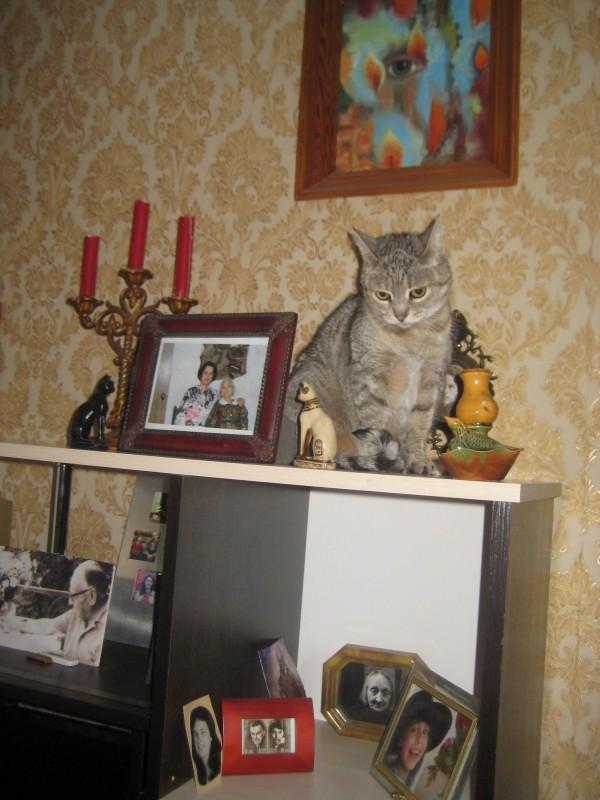 9 ноября-18 кошки 004