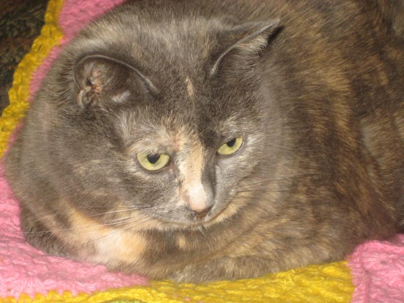 9 ноября-18 кошки 029