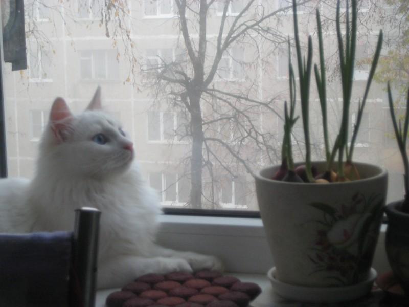 9 ноября-18 кошки 013