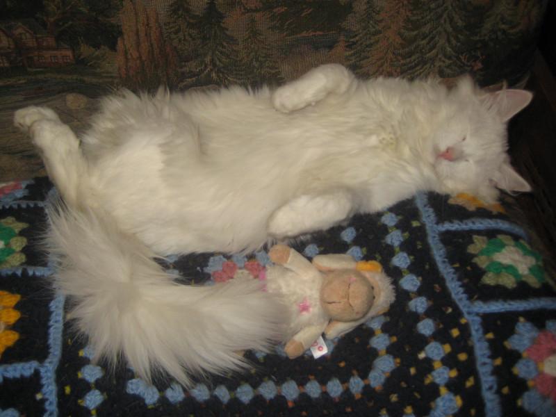 9 ноября-18 кошки 031