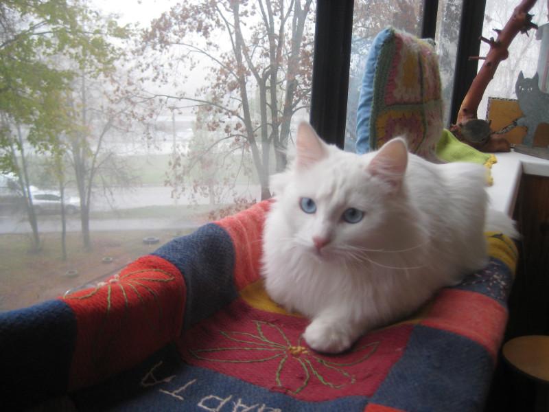 9 ноября-18 кошки 036