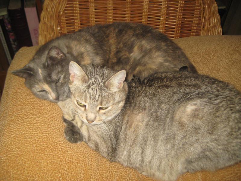 7 декабря коти 004
