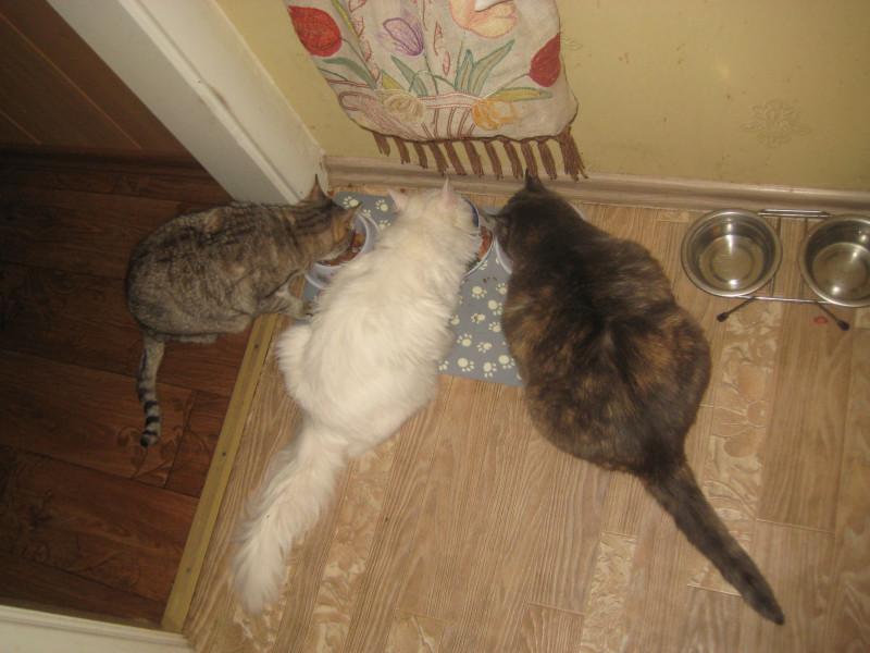 7 декабря коти 008