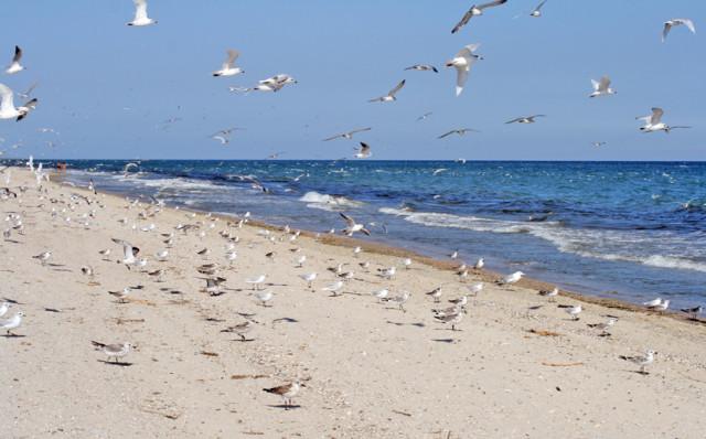 лето, Одесса, море, пляж, дикий пляж, wild beach