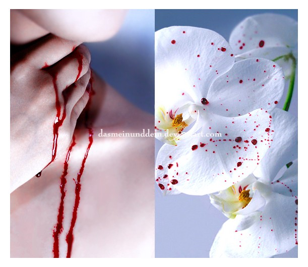 whte orchid with blood
