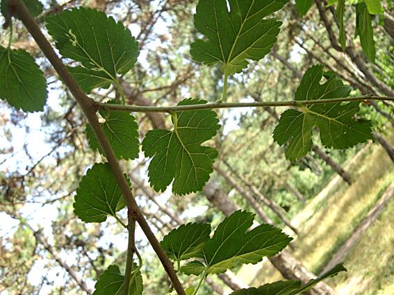 листья, лето, зеленые листики