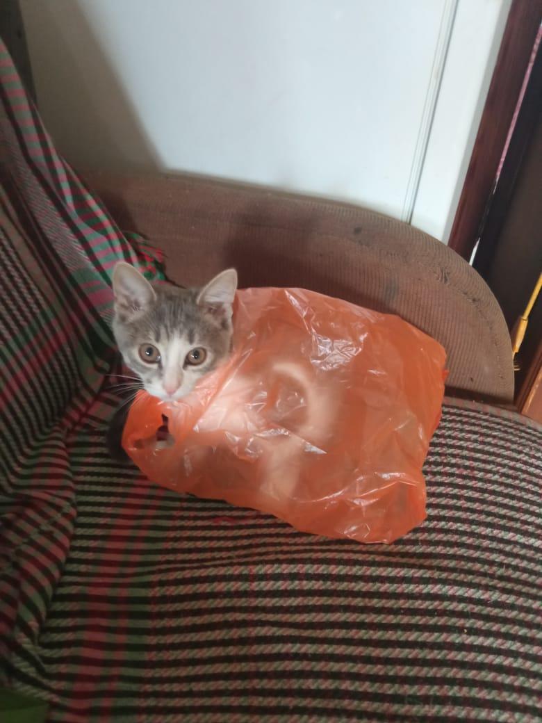 Кошка в сарафане, то Бишь в целлофане