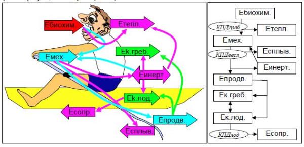 Схема трансформации энергии при гребле.jpg