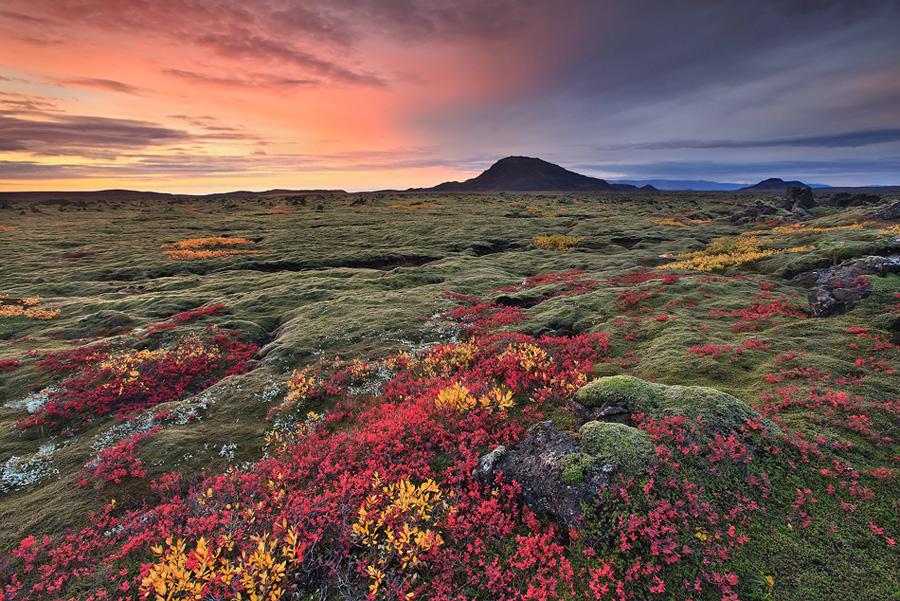 6 Burst of Color - Lava Fields in Autumn Colors in Iceland