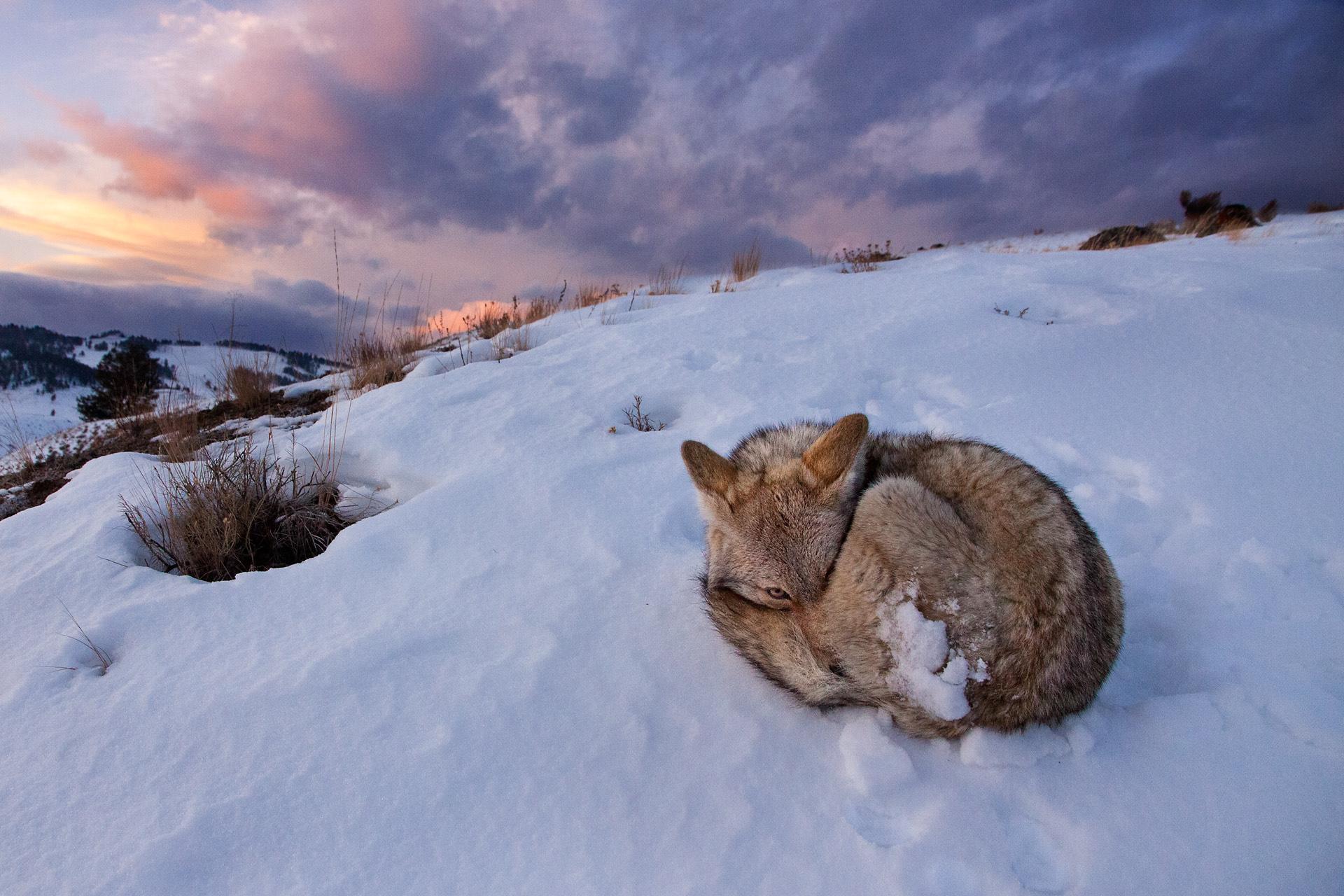 Белый  вечер