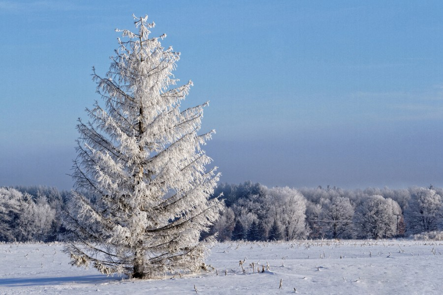 Иллюстрации к стихотворению чародейкою зимою околдован лес стоит