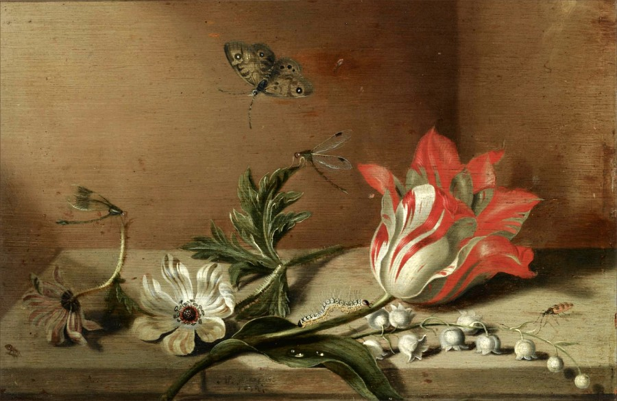 2 Jacob Marrel 1634  Still life with a tulip, anemones