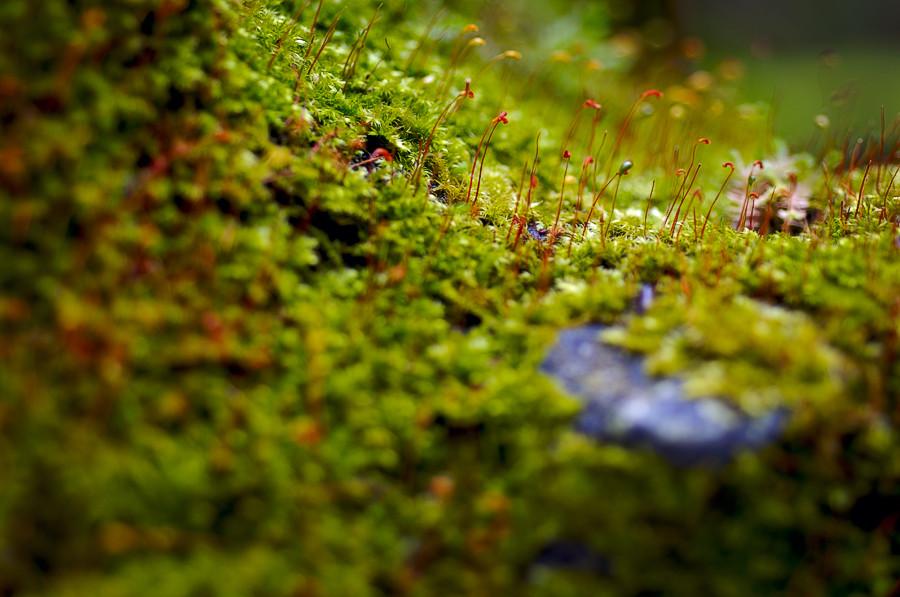 2microcosm крошечные  ростки  как  деревья  в  ботаническом  саду