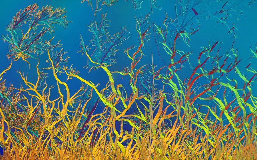 16 морские диатомовые водоросли