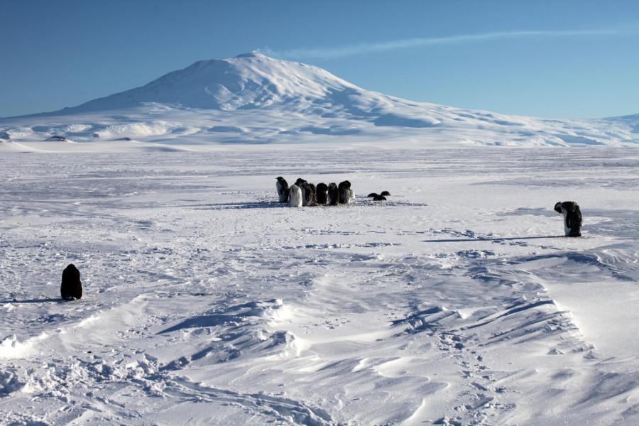 8 Пингвины  и  Эребус.jpg