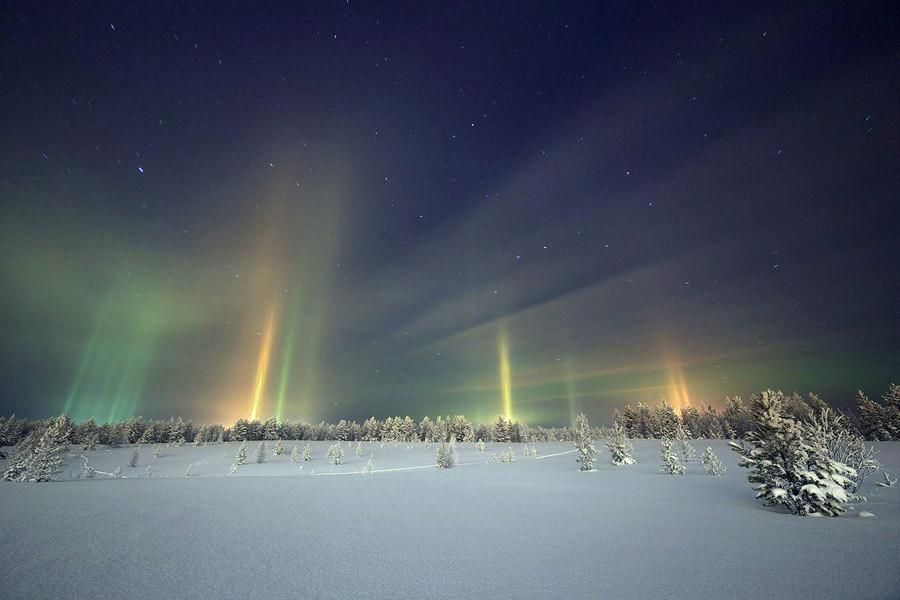 1 Световой лес над ночным городом.jpg