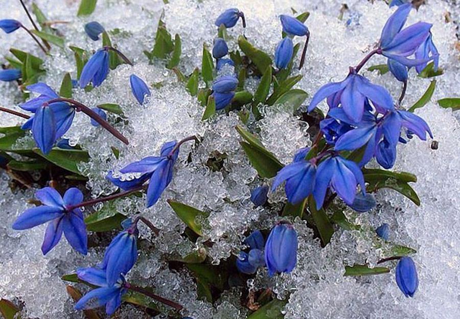 1 С праздником весны, любви и очарования.JPG