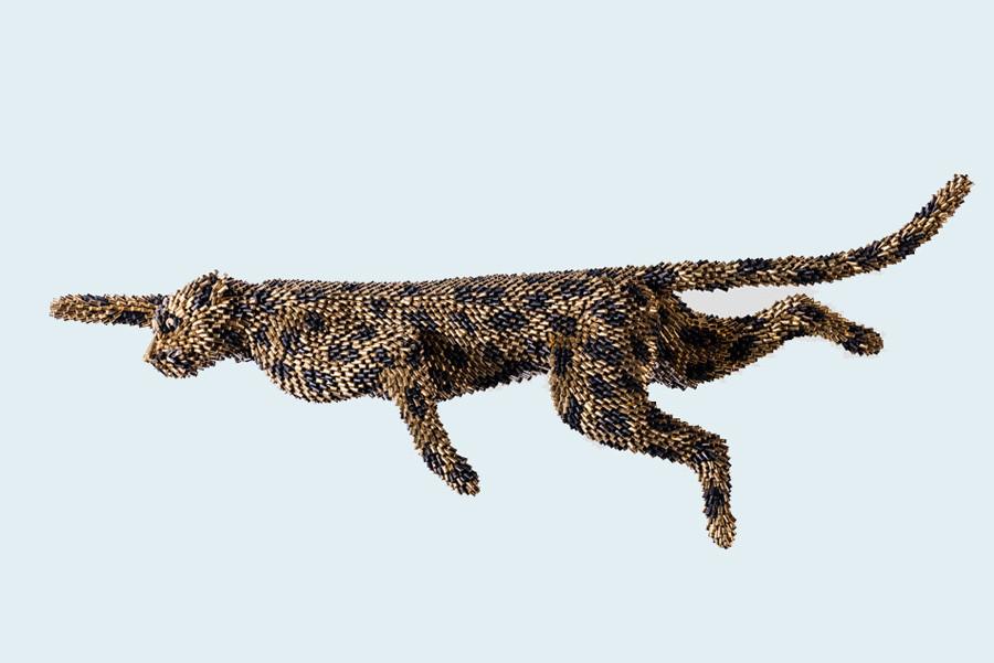 5 wild-cat.jpg