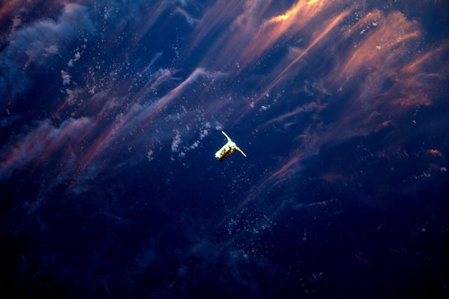 Cygnus .jpg