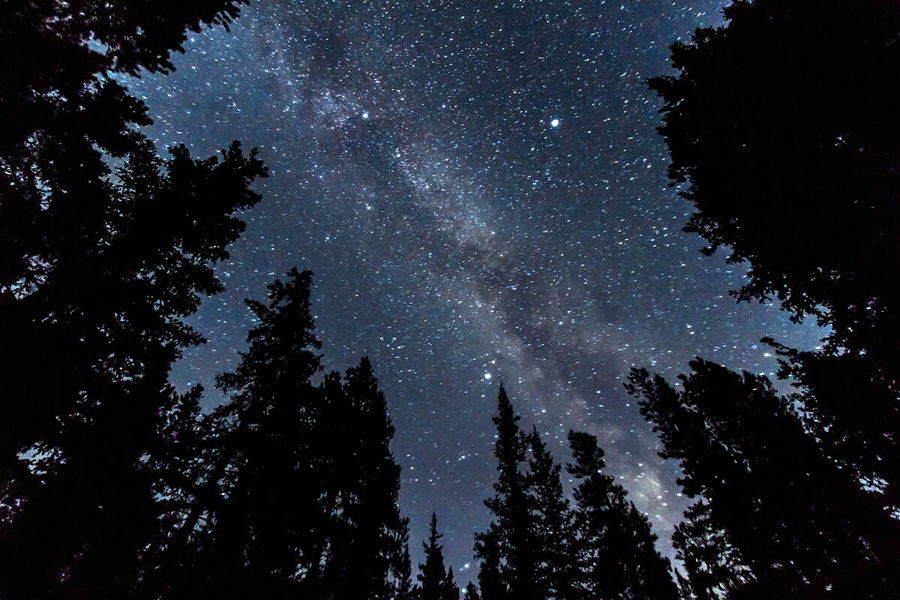 2 Summer Triangle thru trees consisting of the bright stars, Deneb, Vega and Altair  Alan Dyer.jpg