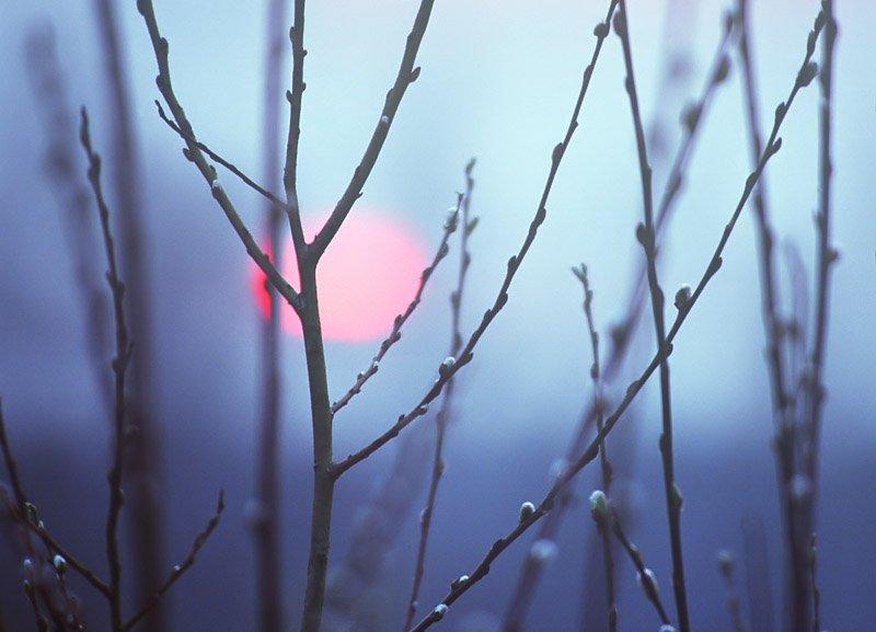 утро  весны