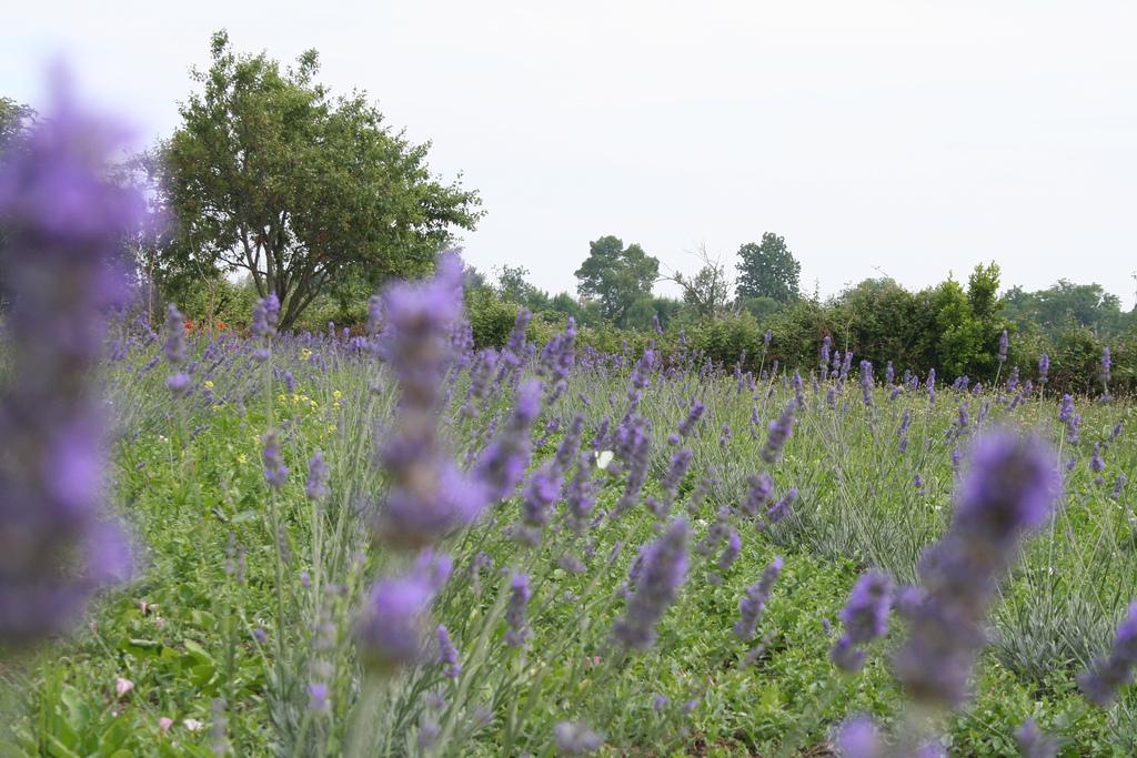 Torcello, fattoria didattica Articiok2