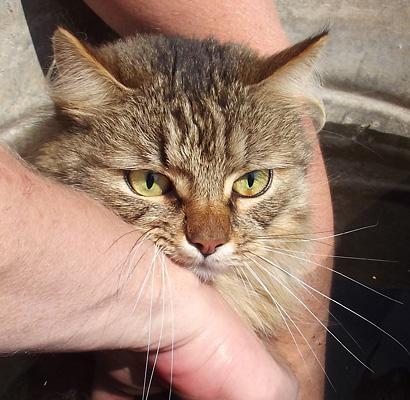 Радужки кот