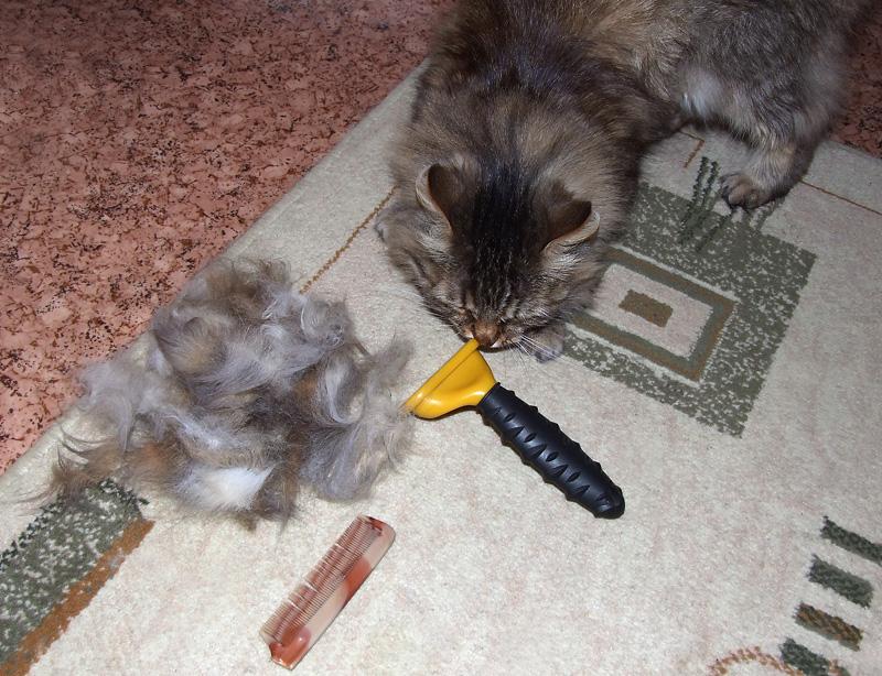 фурминатор для кошек фото до и после сделать своими руками
