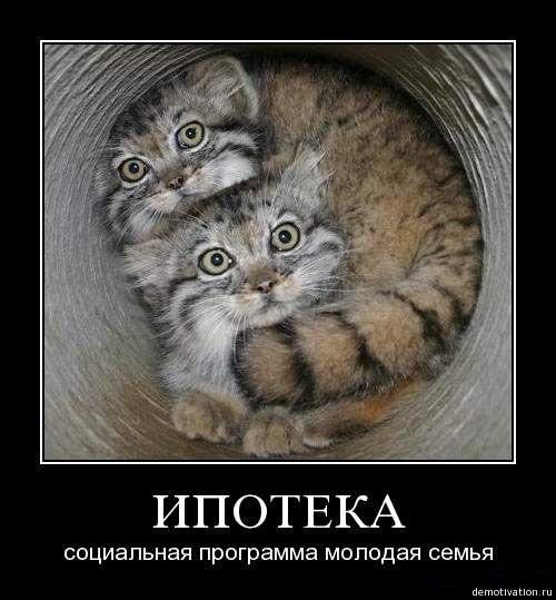 Фото приколы крейзи:
