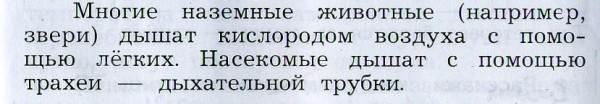 Trakheya