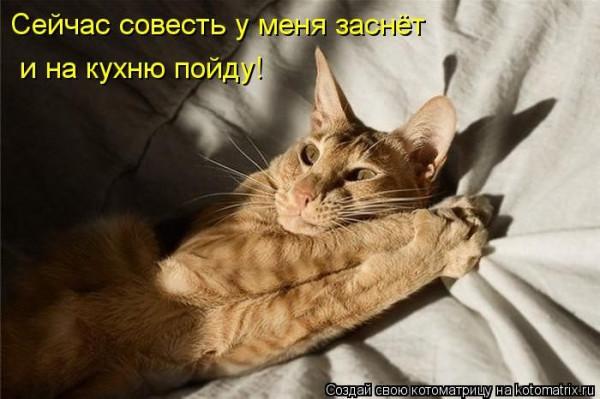 1378439171_037_18626_kotomatrix_37
