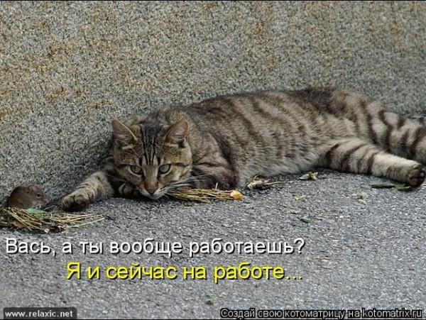 kotomatrix_0893