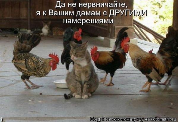 1390713466_kotomatrix1787_resize