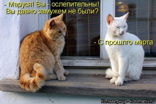 1428139543_kotomatricy-16