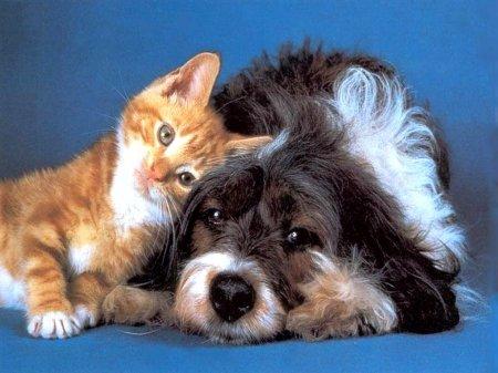 1300176135_1299853150_animals_dogs__001967_1