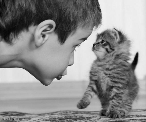 Мальчик-пугает-котика.-600x503