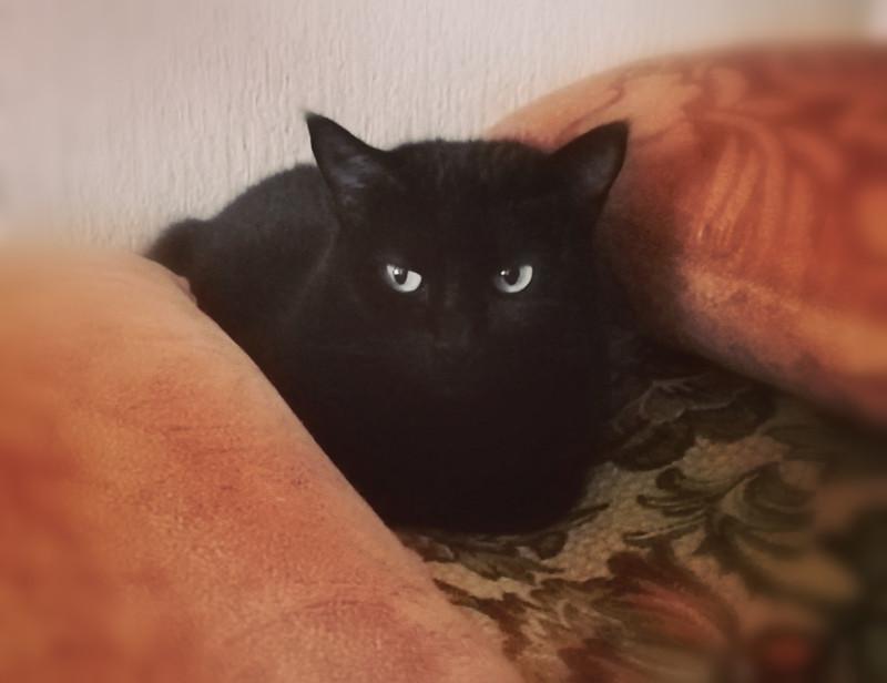 О пледах, котиках и прочем хюгге