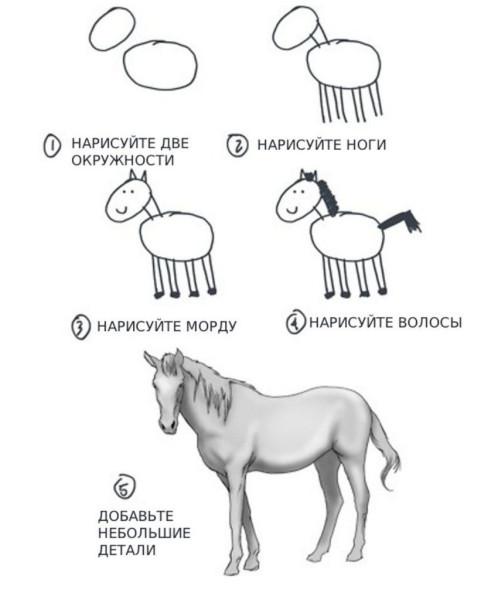 как-нарисовать-лошадь-175998