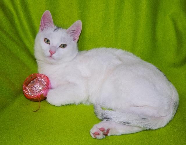Немного воскресного позитива от давно пристроенного котика Снежка