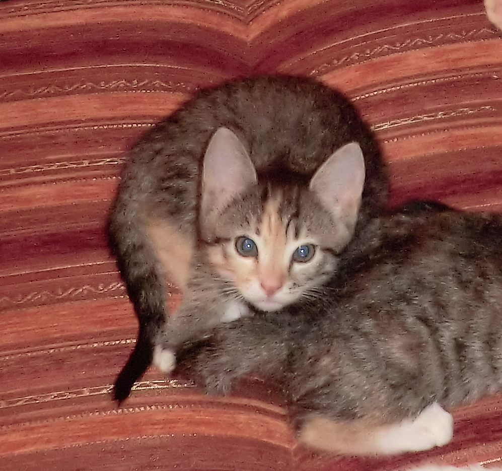 картинки самых котята по возрастам фото хочу