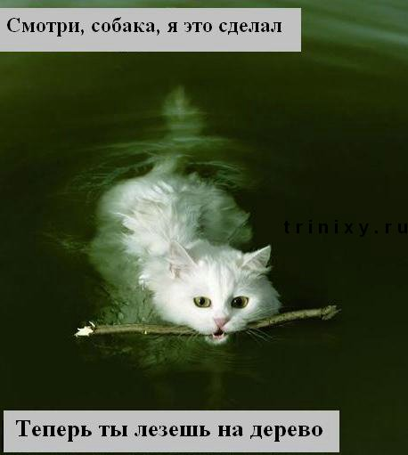 funny_cats_19